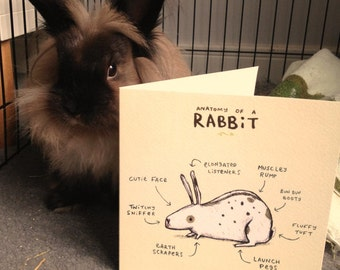 Anatomy Of A Rabbit Card