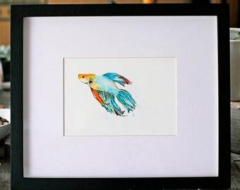 Fighting Fish (Betta) No. 02- 5x7 Print