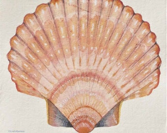 Scallop shell original watercolour illustration painting ocean treasure natural history picture sea creature coastal decor
