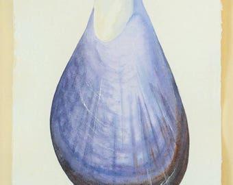 Mussel sea shell original watercolour painting illustration natural history coastal decor beach theme ocean find seashell moules marinieres
