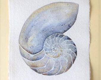 Nautilus original illustration watercolour painting natural history ocean shell sea creature beach style coastal decor