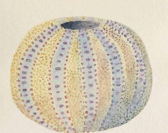Original watercolour illustration painting of a sea urchin part of a coastal beach ocean seaside set series