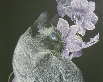 Black and white siamese cat with an orchid background