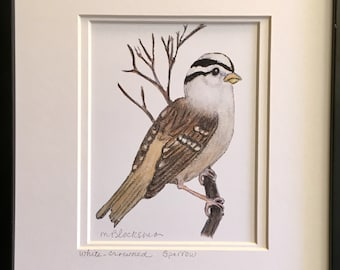 WHITE-CROWNED SPARROW Watercolor Pencil Drawing Painting Matted Print