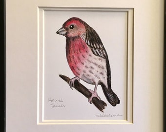 HOUSE FINCH Watercolor Pencil Drawing Painting Double-Matted PRINT