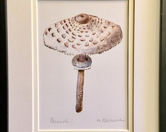 Parasol Mushroom Double-Matted Watercolor Pencil Drawing Painting PRINT