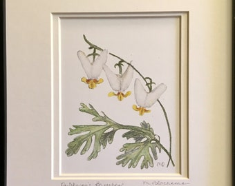 Dutchman's Breeches Double-Matted Watercolor Pencil Drawing Painting PRINT