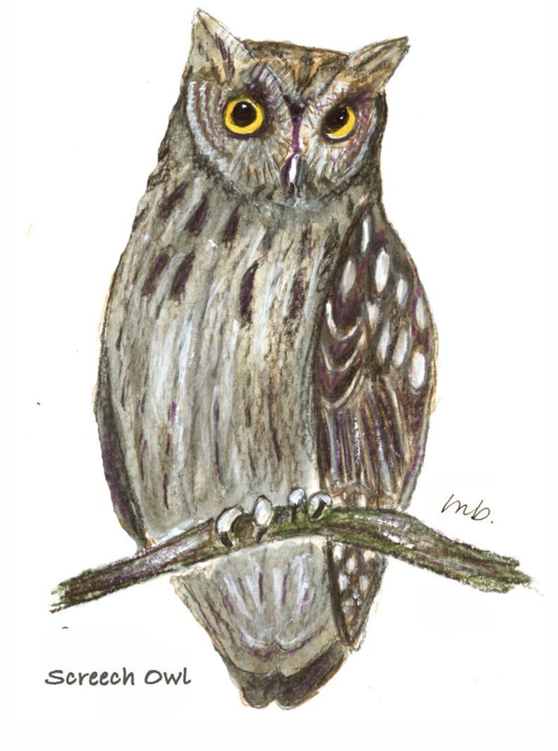OWLS  4 Know Your Nature Note Cards by Mary Blocksma