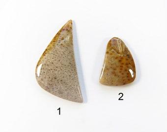 Fossil Palm Wood Cabochons Lots  Petrified Wood Cabochon  Gems  Cabochons  Jewelry Making Supplies  Village Silversmith