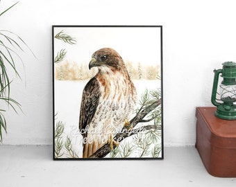 Red Tailed Hawk - Hawk Art - Realistic Hawk - by Tree Talker Art Rachael Caringella