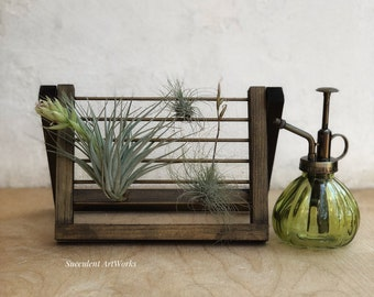 Air Plant Display Etsy