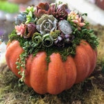 Faux Pumpkin Trimmed with Living Succulents, Autumn, Thanksgiving, Table Decor, Thanksgiving Centerpiece, Hostess Gift, Fall Patio Decor
