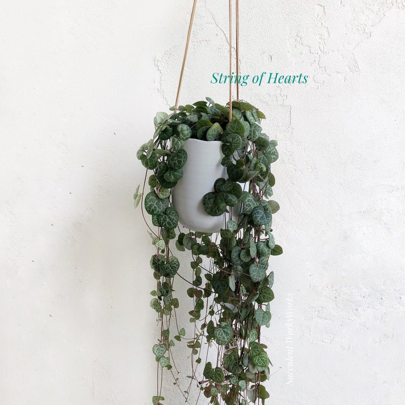 Get Well Gift Thank you Ceramic planter with Hanging String of Pearls Succulent Mother/'s Day Client Gift Housewarming Gift Sympathy