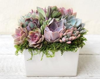 """Succulent Arrangement, 6"""" table arrangement, client gift, valentines arrangement, host gift, table top decor, sympathy gift, girlfriend gift"""