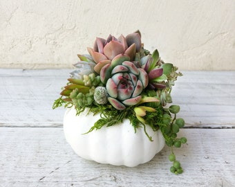 Mini Faux Pumpkins Planted with Real Succulents! Available in White, Orange, or Golden Cream. Harvest decor, Thanksgiving Decor, Fall Decor