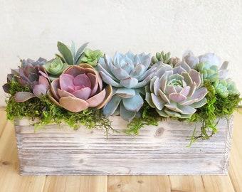 Succulent Arrangement, Garden Box, girlfriend gift, client gift, Succulents, Succulent gift,