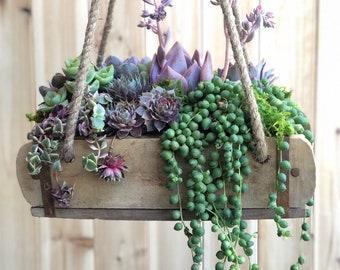 Hanging Succulent Arrangement, repurposed decor, Valentines Gift, home decor, garden decor, Succulent Gift, porch decor, girlfriend gift