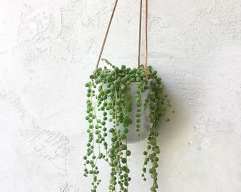 Hanging Succulent, ceramic planter, String of Pearls Succulent, Housewarming Gift, Client Gift, valentine gift, succulent gift