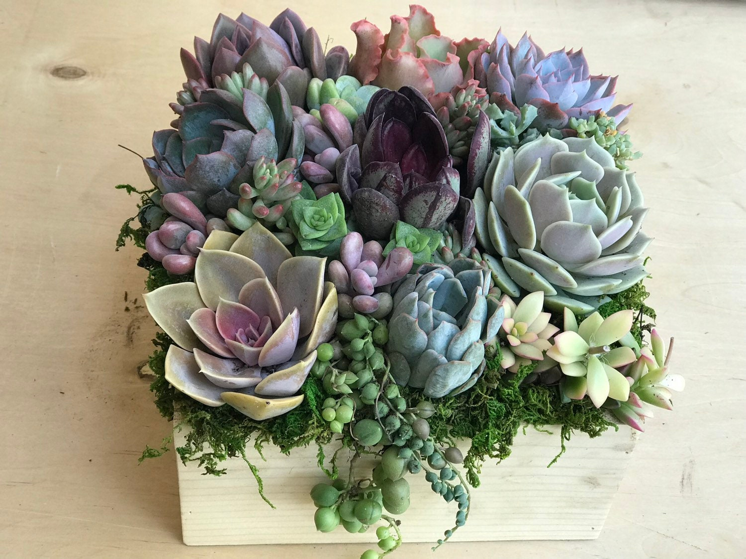 A dozen Succulents in an 8 rustic wooden planter | Etsy