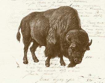 Vintage Bison Buffalo on French Ephemera Print 8x10 P141