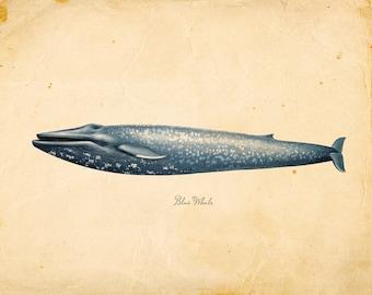 Vintage Blue Whale Print 8x10 P86