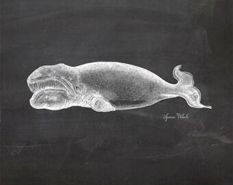 Vintage Sperm Whale Print 8x10 P123