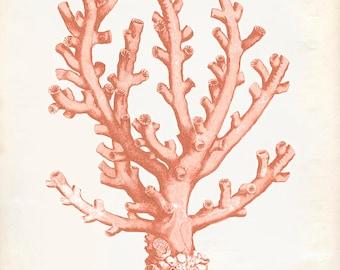 Vintage Ocean Coral Kelp Seaweed Coral Print 8x10 P255