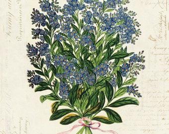 Vintage Botanical Flower on French Ephemera Print 8x10 P39