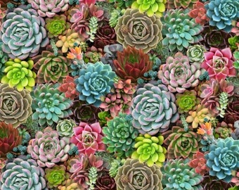 Succulents fabric, Desert plants fabric, Garden girl fabric, Plant lover fabric 100% cotton for Quilting and sewing projects