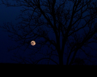 Full Moon and silhouette