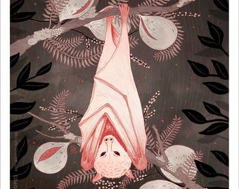 Nocturnal Fruit Bat 8x10 Illustration