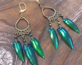 Brass Filigree Drop Chandelier Beetle Wing Earrings with sparkle iridescent green, turquoise, custom, wire-wrapped