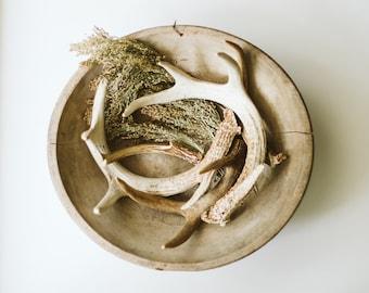 Assorted Natural Deer Antler Sheds | Rustic Modern Wedding Decor | Earthy Boho Accent | Fall Decor
