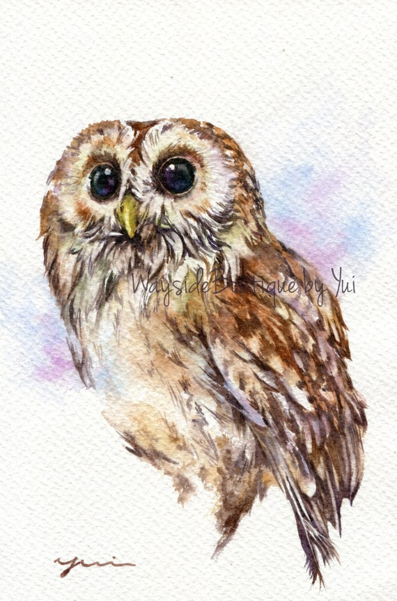 PRINT - Tawny Owl Watercolor painting 7.5 x 11""