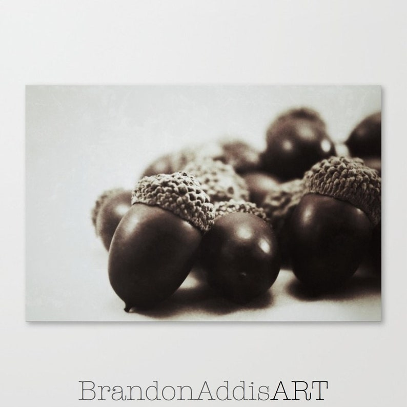 Dining Room Art Fall Harvest Decor Acorn Photograph image 0
