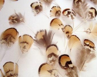 Tribal Mix Natural Reeves Pheasant vernary pheasant  feathers 24 natural pheasant brown beige