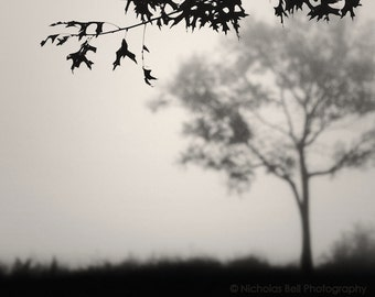 tree photography, landscape photography, tree print, minimalist, nature photography, fog, foggy, nature, trees in fog, September Trees
