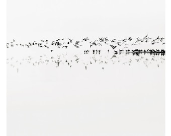 minimalist black and white photography, lake house art, lake print, white art, black and white lake, birds, bird print, minimal