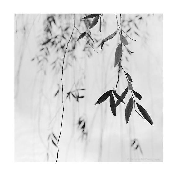 minimalist print set willow zen photography minimalist photography black and white print set spa black and white print set