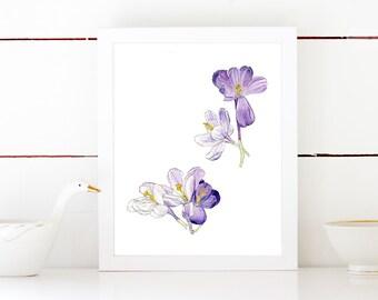 Purple Crocus Watercolor Botanical Illustration Print