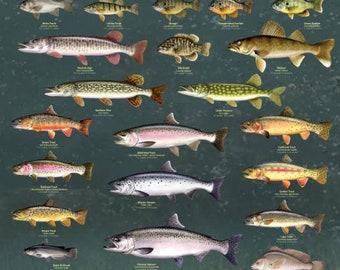 Fresh Water Game Fish Large Laminated Educational Poster