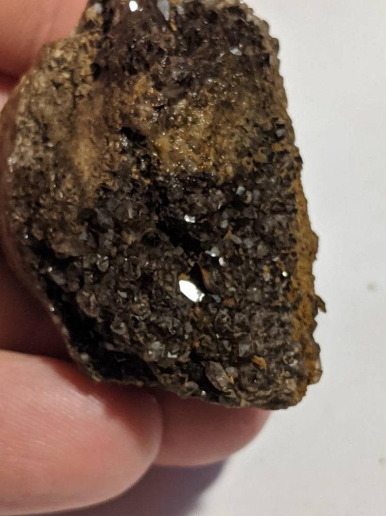 Brilliant Wood Petrified from Alabama
