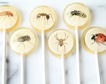 Bugs Insects Halloween Lollipops 12 PCS