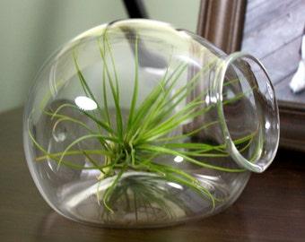 hand blown glass igloo plant terrarium
