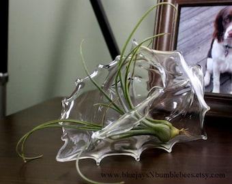 hand sculpted blown glass seashell plant terrarium