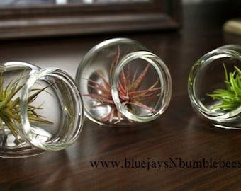 mini hand blown glass globe sitting plant terrarium