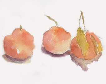 Three Asian Pears watercolor painting, kitchen art, fruits art