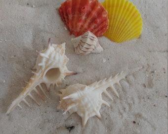 Seashells Light Switch Covers Home Decor Outlet Seashore Turitella