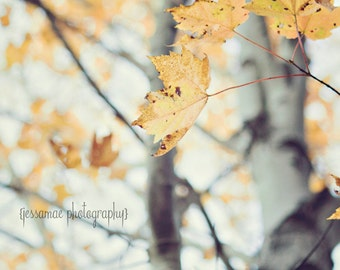 Autumn Tree Photography Print, Autumn Print, Autumn Leaf Print, Maple Tree Photography, Autumn Leaves Art, Tree Decor, Leaf Art