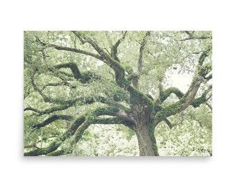 Oak Tree Photography Print, Giant Oak Tree Print, Southern Oak Print, Green Oak Tree Wall Art, Oak Tree Poster, Oak Print, Oak Tree Wall Art
